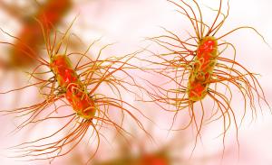 bacteria cell digital