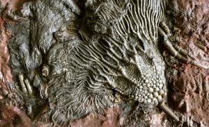 fossil algae