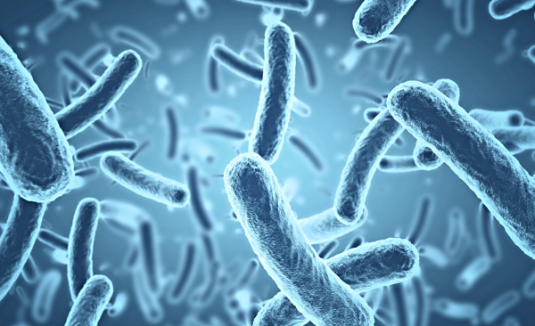 Read more about the article 10 Things You Never Knew About Bacteria
