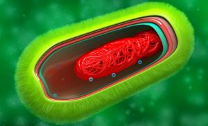 prokaryote cell anatomy